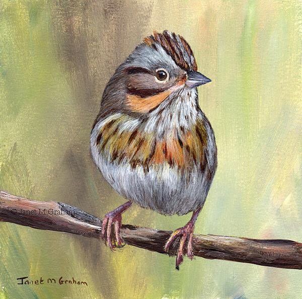 Art: Lincoln's Sparrow by Artist Janet M Graham