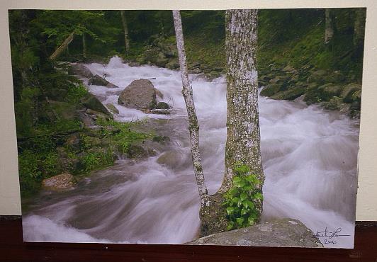 Art: Still Waters by Artist J. Labbe