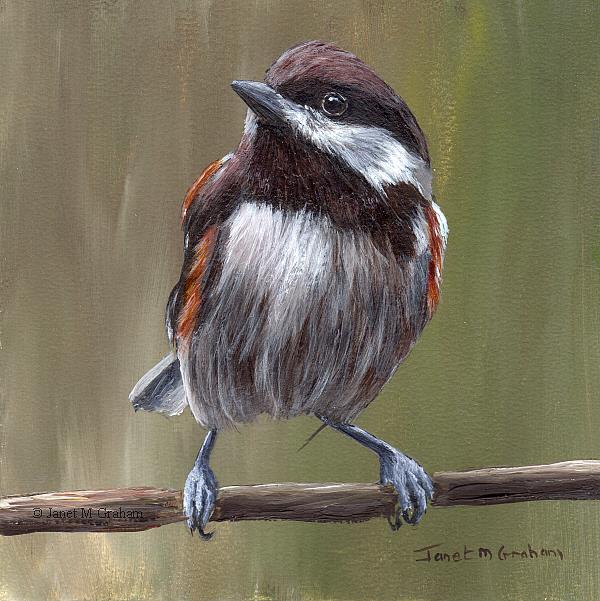 Art: Chestnut Backed Chickadee No 3 by Artist Janet M Graham