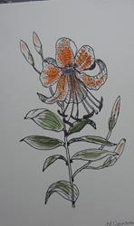 Art: tigerlily by Artist Nancy Denommee