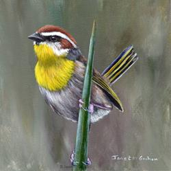 Art: Rufous Capped Warbler No 4 by Artist Janet M Graham