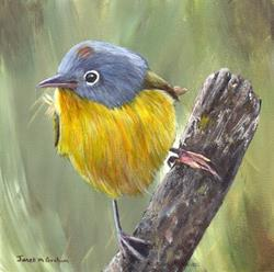 Art: Nashville Warbler by Artist Janet M Graham