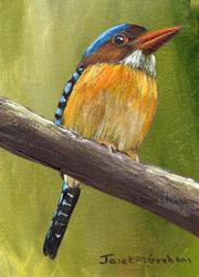Art: Banded Kingfisher ACEO by Artist Janet M Graham