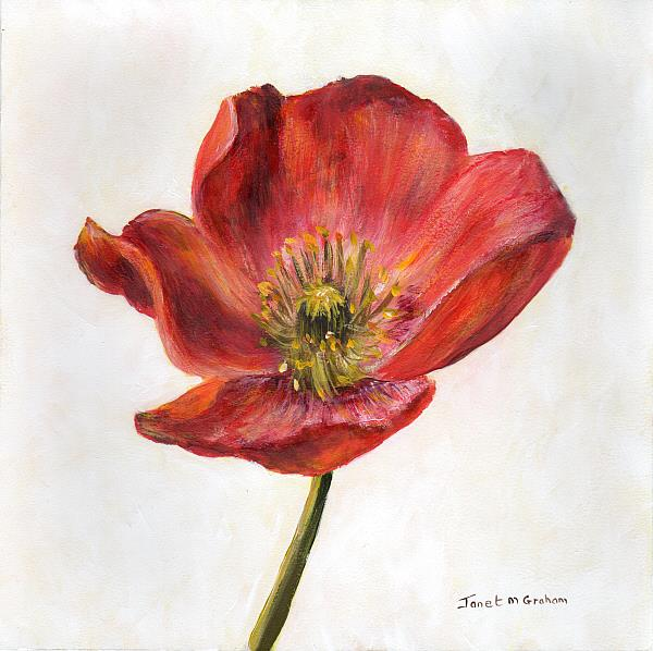 Art: Poppy by Artist Janet M Graham