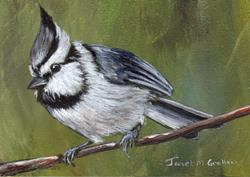 Art: Bridled Titmouse ACEO by Artist Janet M Graham