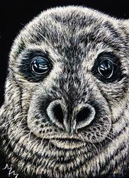 Art: Seal Pup  (SOLD) by Artist Monique Morin Matson