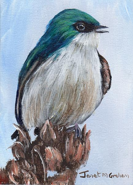 Art: Tree Swallow ACEO by Artist Janet M Graham