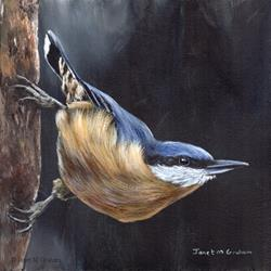 Art: Nuthatch No 2 by Artist Janet M Graham
