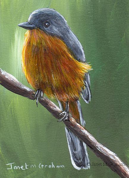 Art: Silverbird ACEO by Artist Janet M Graham