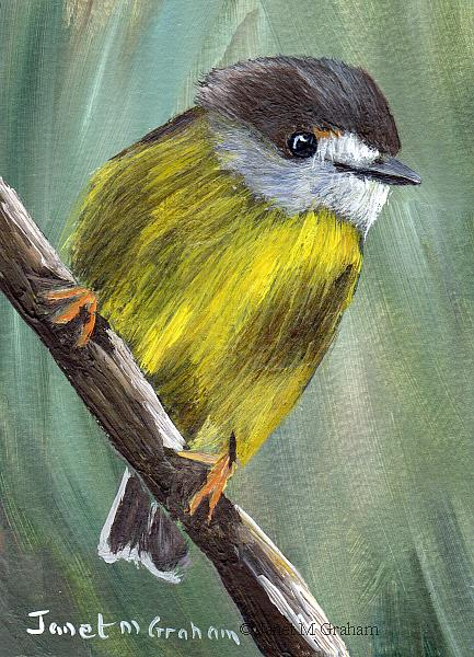 Art: Pale Yellow Robin ACEO by Artist Janet M Graham