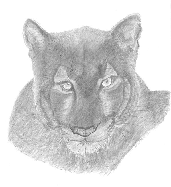 Art: LIONESS by Artist TheClassyCanvas by D. Lars