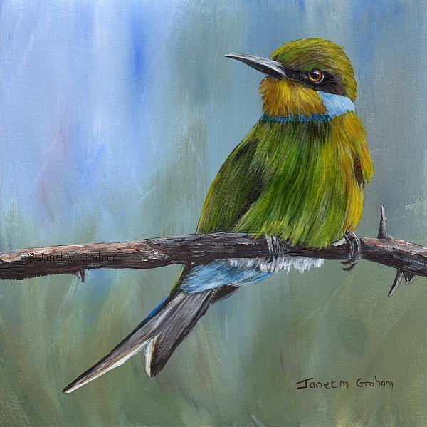 Art: Swallow Tailed Bee-eater by Artist Janet M Graham