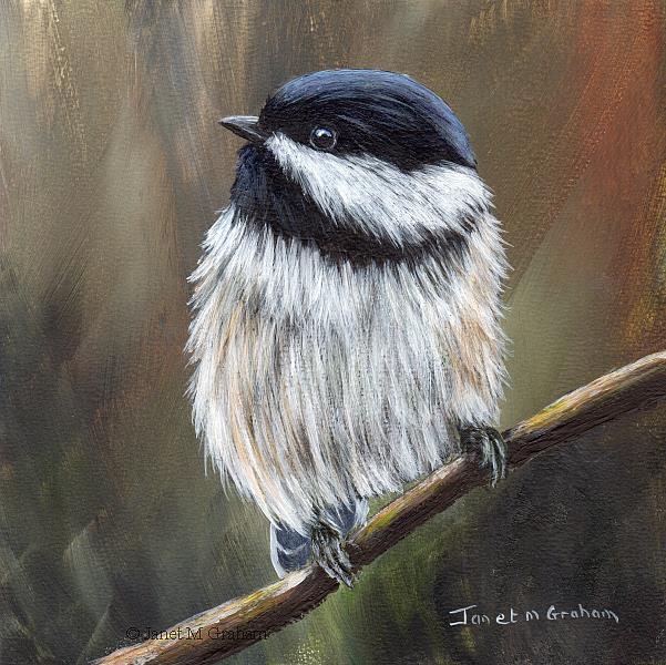Art: Black Capped Chickadee No 5 by Artist Janet M Graham