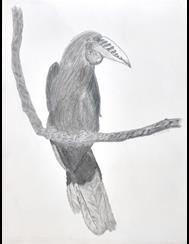 Art: JINGA THE JUNGLE BIRD.jpg by Artist TheClassyCanvas by D. Lars