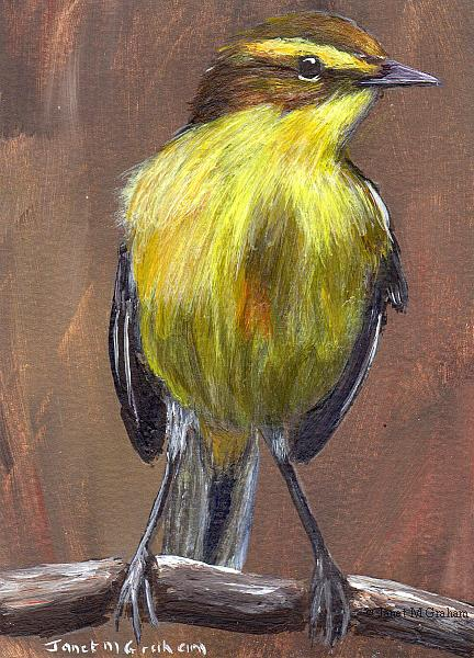 Art: Yellow Wagtail ACEO by Artist Janet M Graham