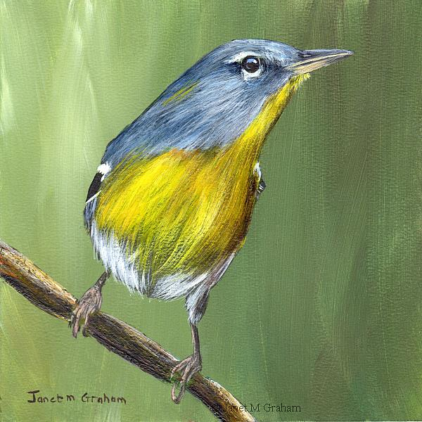 Art: Northern Parula No 2 by Artist Janet M Graham
