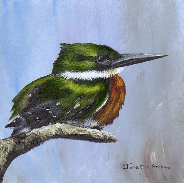Art: Green Kingfisher by Artist Janet M Graham