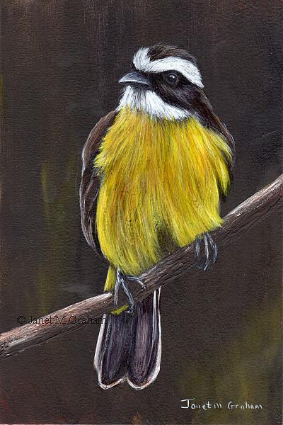 Art: Lesser Kiskadee by Artist Janet M Graham