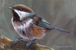 Art: Boreal Chickadee No 2 by Artist Janet M Graham
