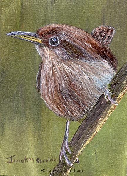 Art: House Wren ACEO by Artist Janet M Graham