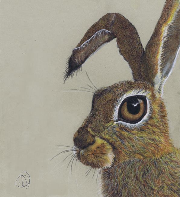 Art: BROWN HARE h4021 by Artist Dawn Barker