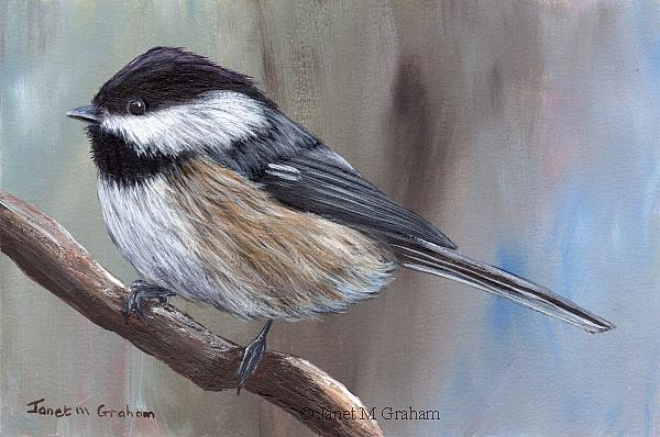 Art: Black Capped Chickadee No 6 by Artist Janet M Graham