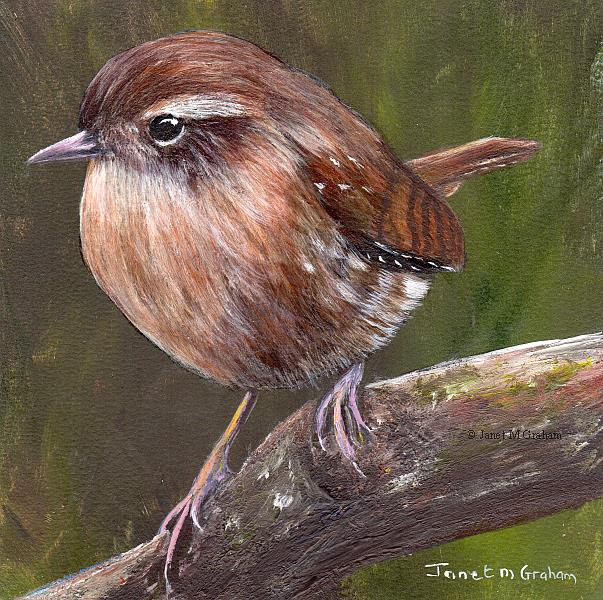Art: Winter Wren by Artist Janet M Graham