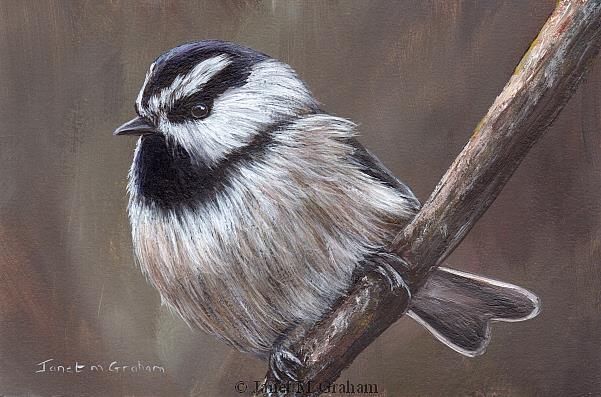 Art: Mountain Chickadee No 2 by Artist Janet M Graham