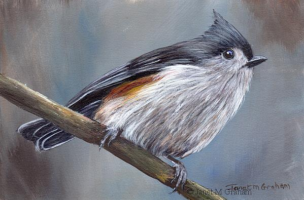 Art: Tufted Titmouse No 10 by Artist Janet M Graham