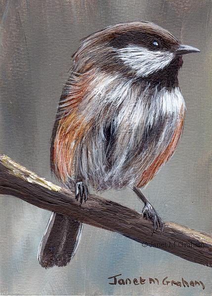 Art: Boral Chickadee ACEO by Artist Janet M Graham