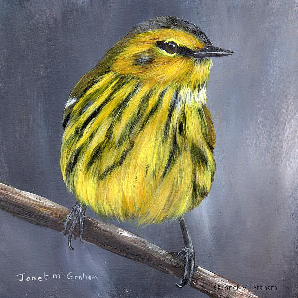 Art: Cape May Warbler by Artist Janet M Graham