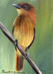 Art: Cinnamon Becard ACEO by Artist Janet M Graham
