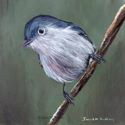 Art: Blue Gray Gnatcatcher by Artist Janet M Graham