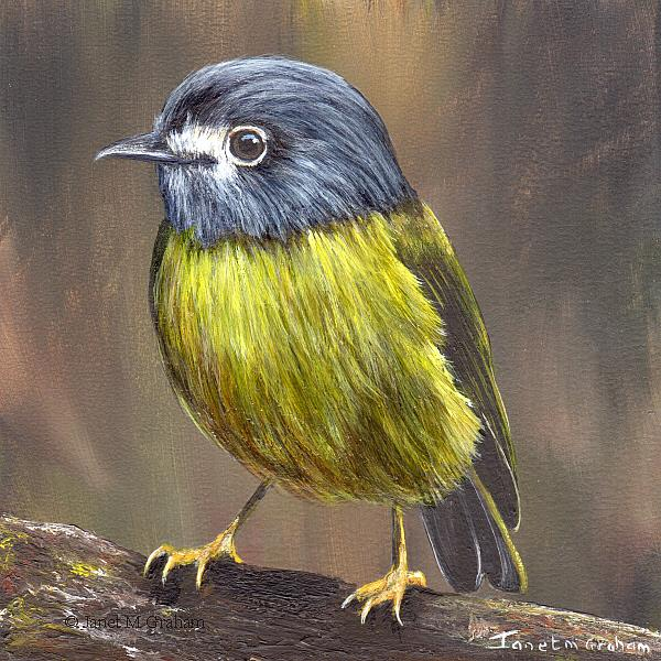 Art: Pale Yellow Robin by Artist Janet M Graham