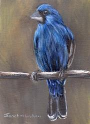 Art: Blue Grosbeak ACEO by Artist Janet M Graham
