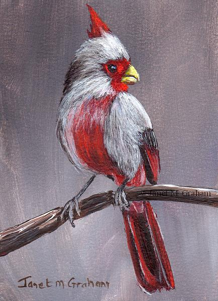 Art: Pyrrhuloxia ACEO by Artist Janet M Graham