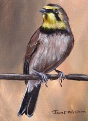 Art: Horned Lark ACEO by Artist Janet M Graham