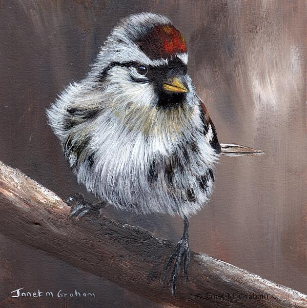Art: Common Redpoll by Artist Janet M Graham