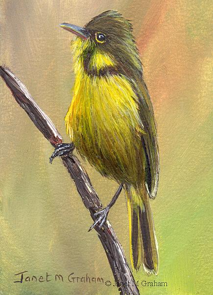 Art: African Yellow Warbler ACEO by Artist Janet M Graham