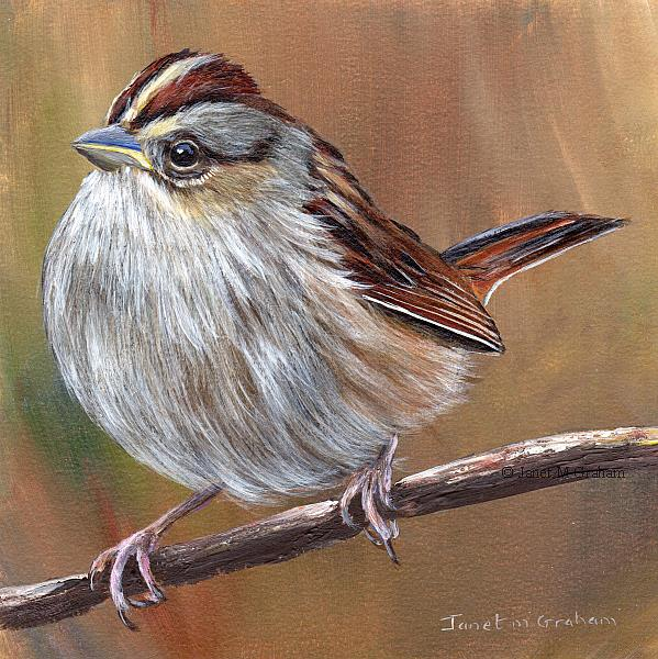 Art: Swamp Sparrow by Artist Janet M Graham