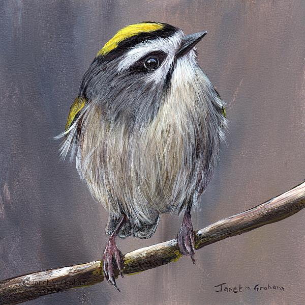 Art: Golden Crowned Kinglet No 3 by Artist Janet M Graham