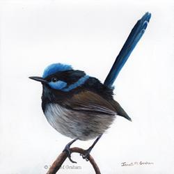 Art: Superb Fairy Wren No 10 by Artist Janet M Graham