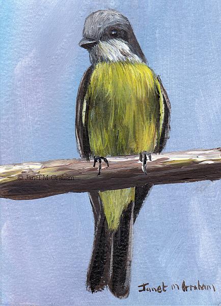 Art: Tropical Kingbird ACEO by Artist Janet M Graham