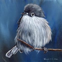 Art: Black Capped Gnatcatcher by Artist Janet M Graham
