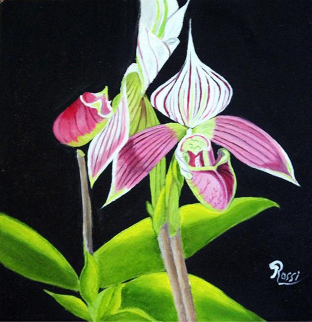 Art: lady slipper orchid by Artist Rossi Kelton