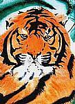 Art: Wild Tiger by Artist Rossi Kelton