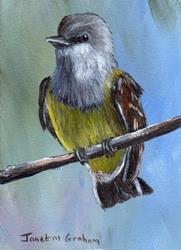 Art: Western Kingbird ACEO by Artist Janet M Graham