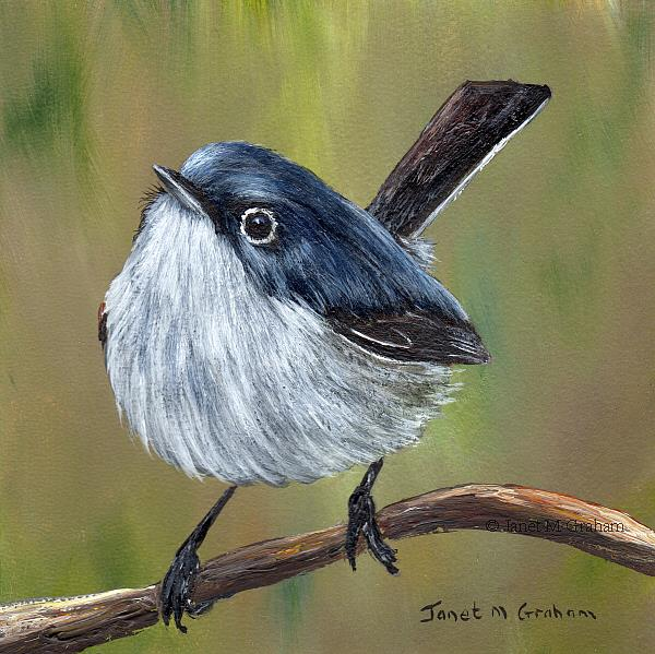 Art: Blue Gray Gnatcatcher No 2 by Artist Janet M Graham