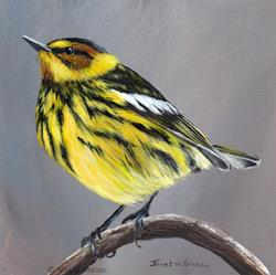Art: Cape May Warbler No 2 by Artist Janet M Graham