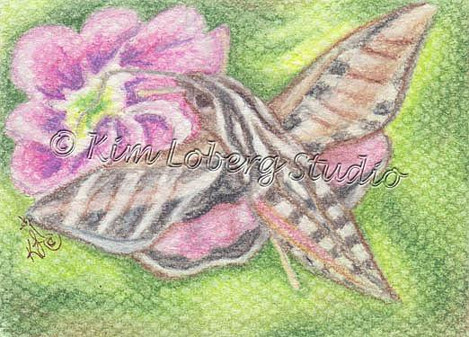Art: Sphinx Hawk Moth by Artist Kim Loberg